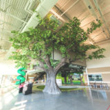 Appleton Alliance treehouse