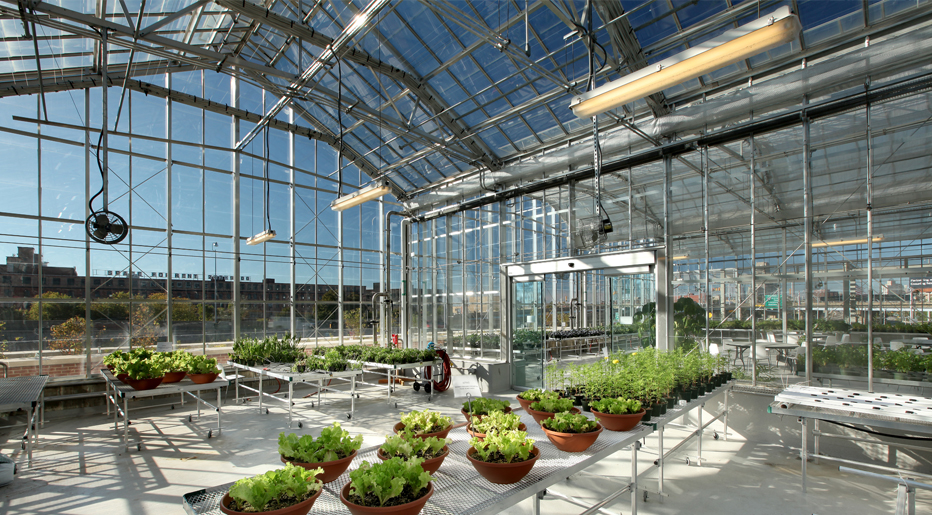 Grand Rapids Downtown Market Rooftop Greenhouse
